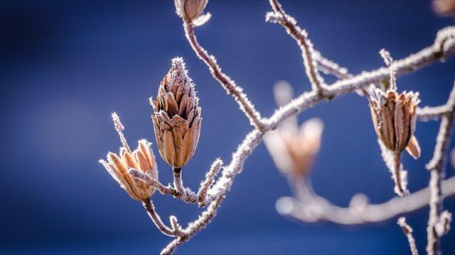 メダカの冬